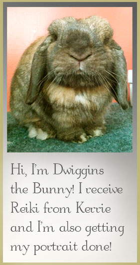 Image of Dwiggins the Bunny, a client of Spirit Animal Massage